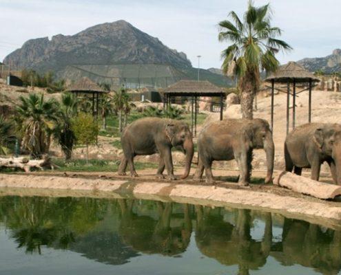 Elefantes Terra Natura